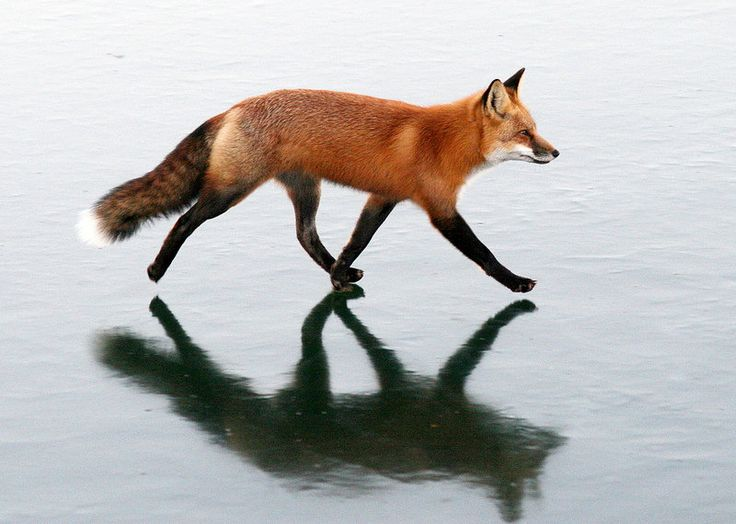 Amazing Photos of Foxes by Mary Lee Agnew