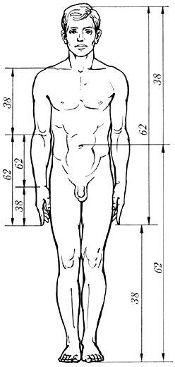 Золотое сечение. Золотые пропорции в фигуре человека