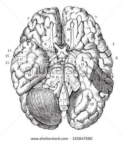 Anatomi Organlar 12 / Anatomy Organs 12 | Find us on > https://www.facebook.com/maviturta , https://instagram.com/maviturta/ , https://twitter.com/maviturta , https://www.facebook.com/groups/maviturta/  #Anatomi #anatomy #organ #organs #draw #drawing #design #sketch #sketching