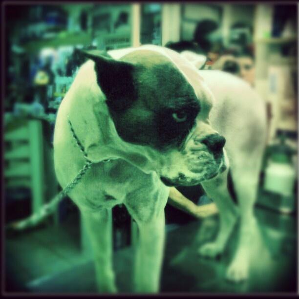 #Boxer - @batafoukos- #webstagram