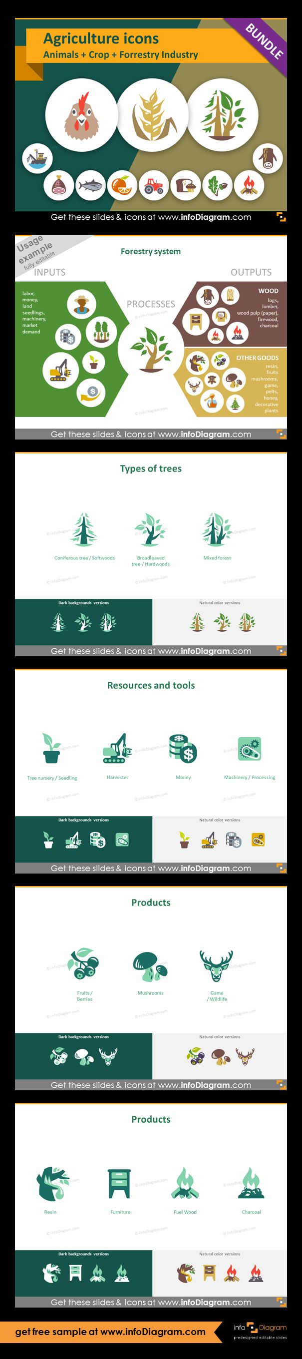 Food and Agriculture icons: Animals, Crop Cultivation, Forestry. All symbols in simple flat style, suitable for Metro UI style graphics. Icons provided in 5 versions. Graphic presenting forestry process with icons of inputs and outputs. Icons showing types of trees and forests. Graphics of: softwoods, hardwoods, mixed forest. Resources and tools in forestry and wood industry. Icons of: seeding, harvester, money, machinery. Products from forestry and wood industry: fruits, mushrooms…