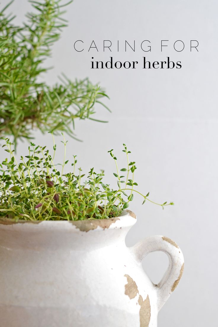 tips for keeping indoor herbs alive for longer than a month - Kopfteil Plant Knig