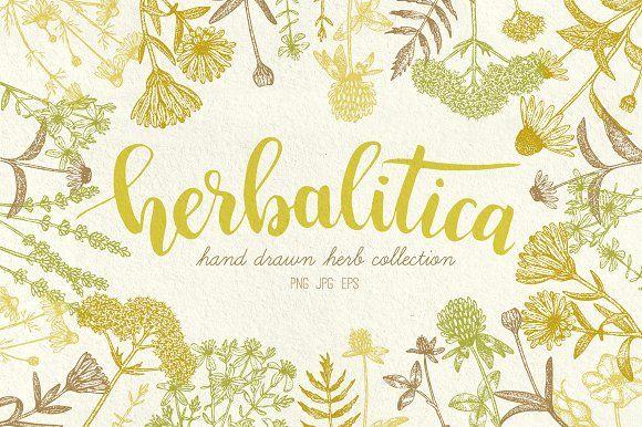Herbalitica Vintage Plants by Eclosque on @creativemarket