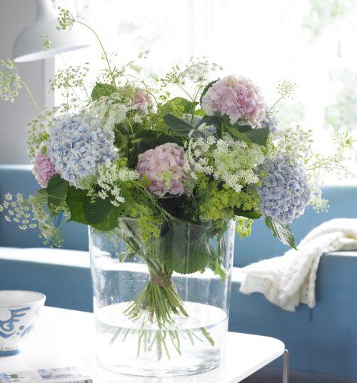 10 meilleures id es propos de hortensia bleu sur - Terre pour hortensia bleu ...