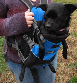 Leftovers 4 Dinner: OutDoor Dog Product Review: Kyjen Outward Hound Legs Out Front Carrier!