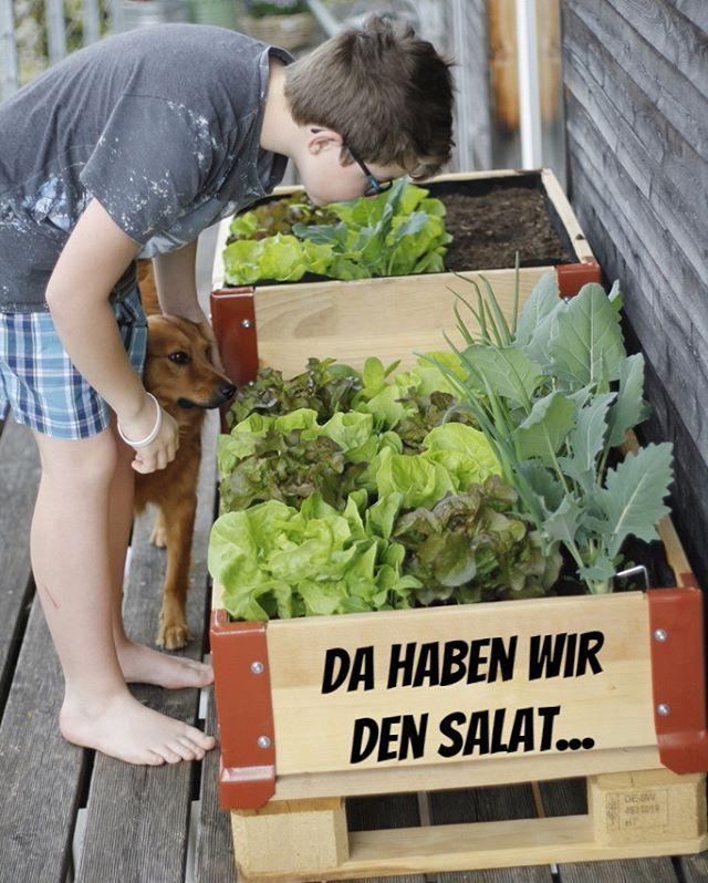 Da haben wir den Salat , Anfangs März für den neuen Blogbeitrag für Migros Do it + Garden gepflanzt, jetzt dann schon bald erntereif. #erstersalat #Hochbeete #Balkon #Aprilgemüse #Urbanfarming #doitgarden #balkongarten #doit #paletten #kohlrabi #kopfsalat