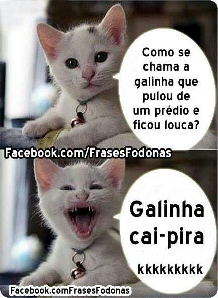 Gatinho 04