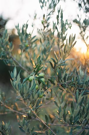 Delicate Provence Sunrise Wedding Ideas