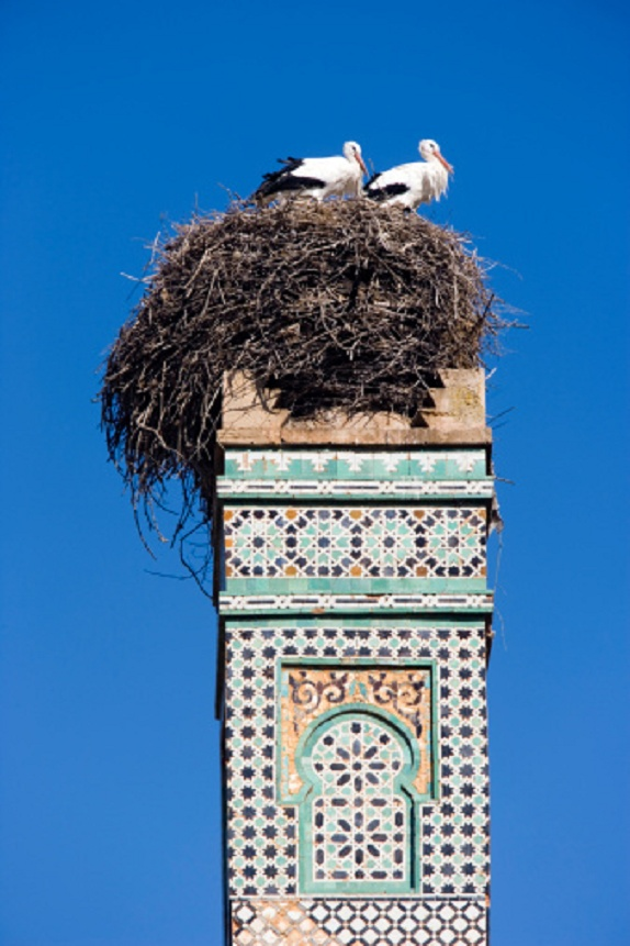 The stork nest and the minaret in Chellah, Morocco