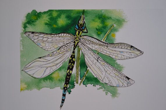 Dragonfly  Male Hawker by sarahNetLtd on Etsy