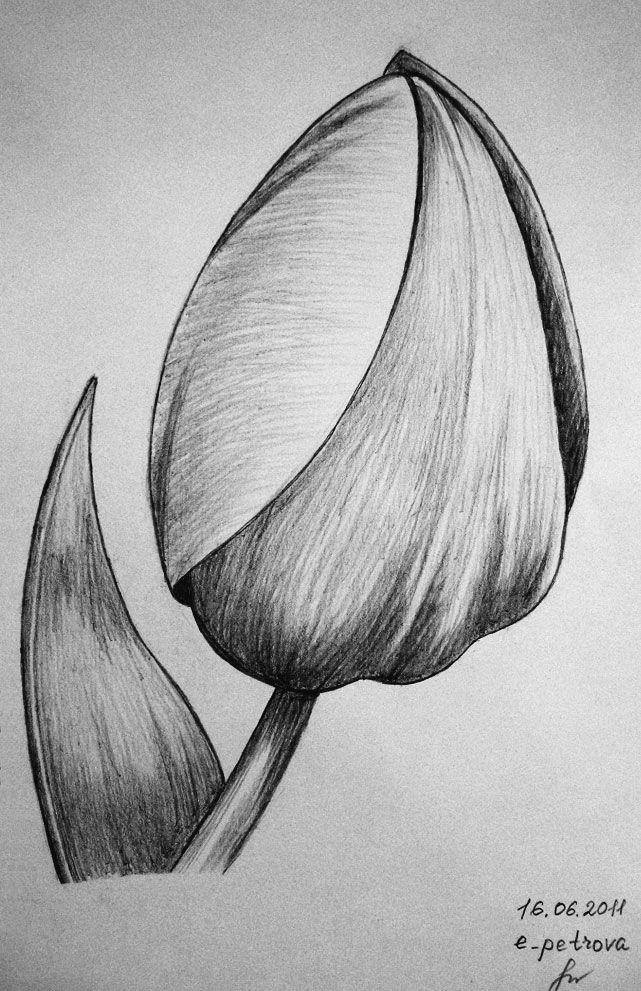 цветок рисунок карандашом простой такое напоминал