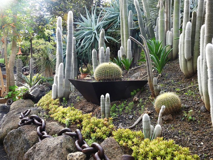 Lesley A Butler posted a photo:  Nearly 3 acres of display gardens are currently under development at Roraima Nursery. Combining a unique terrain with innovative landscaping concepts using rocks and industrial artifacts, the gardens will showcase how cacti and succulents can be combined with other plants such as palms and pines to create a beautiful and dramatic garden that is both low in maintenance and requires little water..  .  The gardens will be open to the public from Saturday 29th of…
