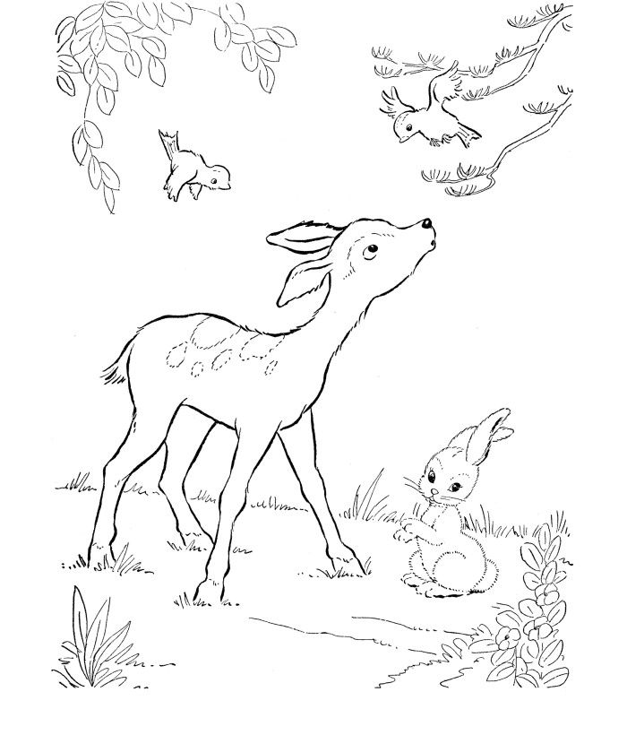 Coloring Deer Coloring Pages With Birds And Bunny On Free Deer Coloring Pages Images Deer Coloring Pages With Birds And Bunny Gambar Hewan Warna Buku Mewarnai