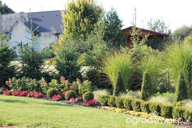 Ogród Sylwii od początku cz.II - strona 365 - Forum ogrodnicze - Ogrodowisko