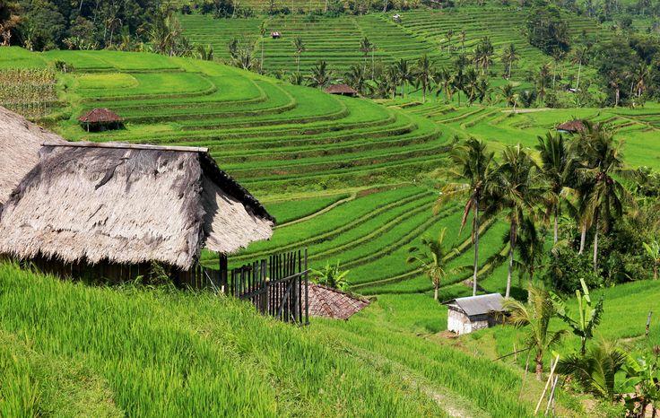 Endless rice terraces Jatiluwih by David Myslivec on 500px