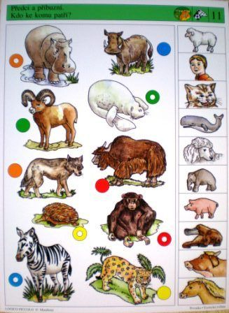 Soubor Logico Piccolo - Prvouka Prvouka - Exotická zvířata  Určeno pro předškolní děti a první až třetí ročník ZŠ. Výstavbou a stylem ilustrací představuje volné pokračování u dětí
