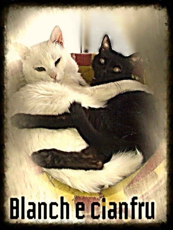 Blanch e Cianfrusaglia