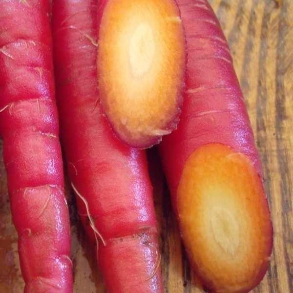 Gulerod 'Cosmic Purple' <br><i>Daucus carota var. sativus</i>