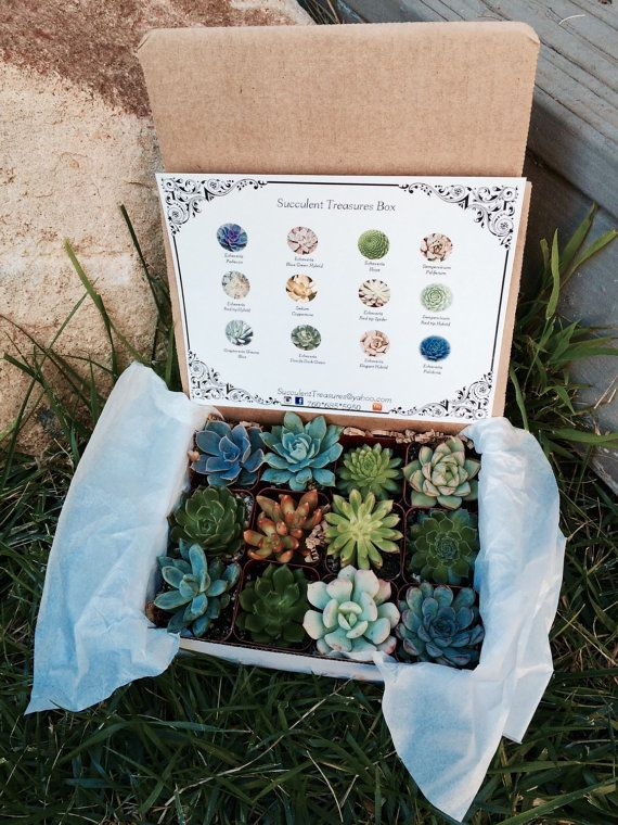 Succulent Treasures Candy Box. The perfect unique living gift! Our Candy boxes are made up of a dozen rare hybrid succulents.