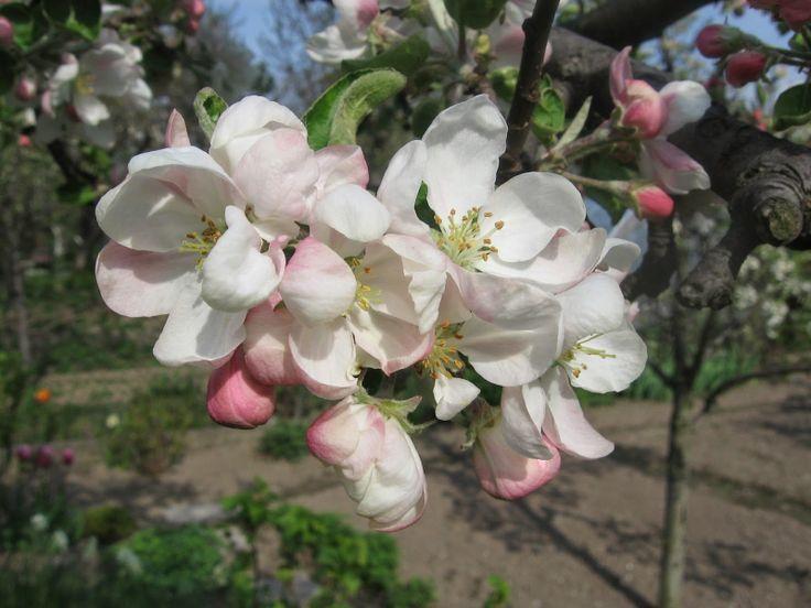 Przyroda na 6: Połącz kwiaty z owocami lub nasionami