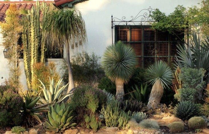 Drought tolerant succulents-garden-design-los-angeles-agaves-gardenista