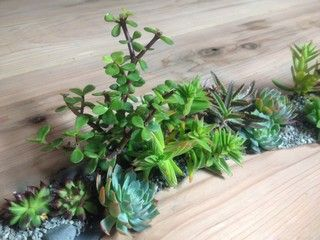 Succulents planted in redwood desk - asian - tabletop - san francisco - by Metta Landscapes