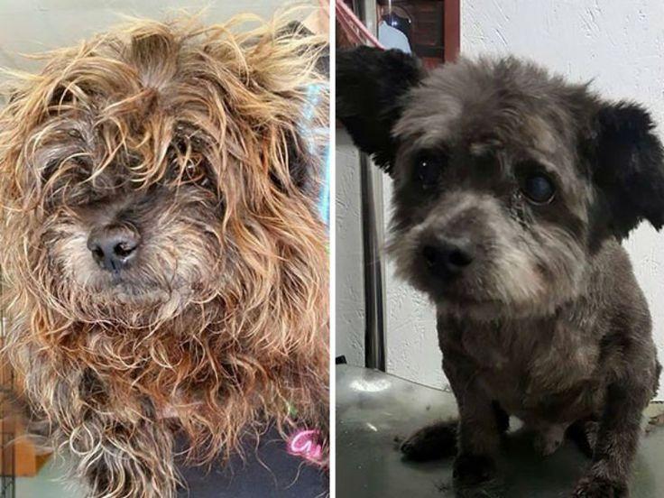 A norte-americana Nicole Elliot resolveu adotar um cão recentemente em sua cidade. Porém, ao escolher seu novo animal, ela tomou uma decisão completamente inesperada: ela decidiu levar para casa o Chester, um cãozinho com câncer terminal.