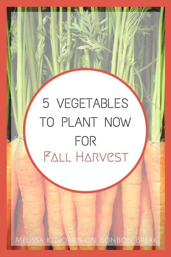 5 Vegetables to Plant Now for a Fall Harvest by Melissa K. Norris
