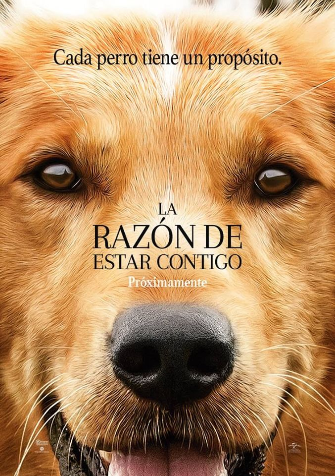 La Razon De Estar Contigo Mega Latino 720p A Dogs Purpose Full Movies Online Free Free Movies Online