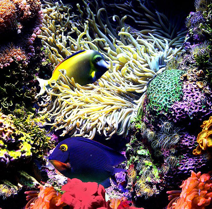 36 best home aquarium images on pinterest fish aquariums for Starting a saltwater fish tank