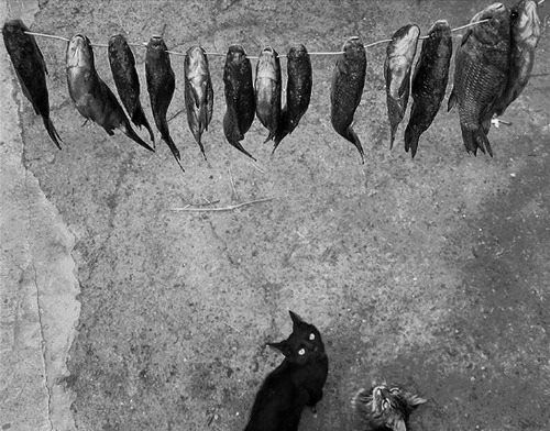 1000 images about alex howitt on pinterest photos lol and