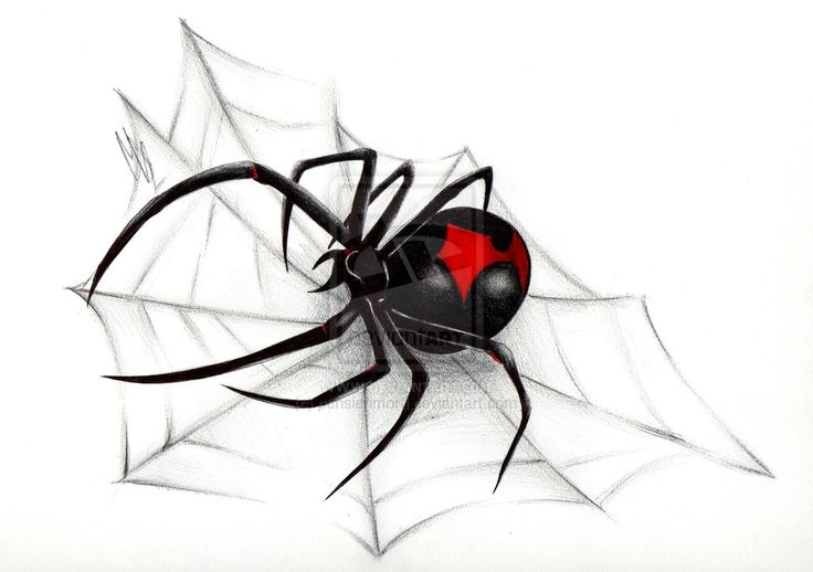 Black Widow Spider Web | Black Widow Spider Web Drawing Black Widow by pensierimorti