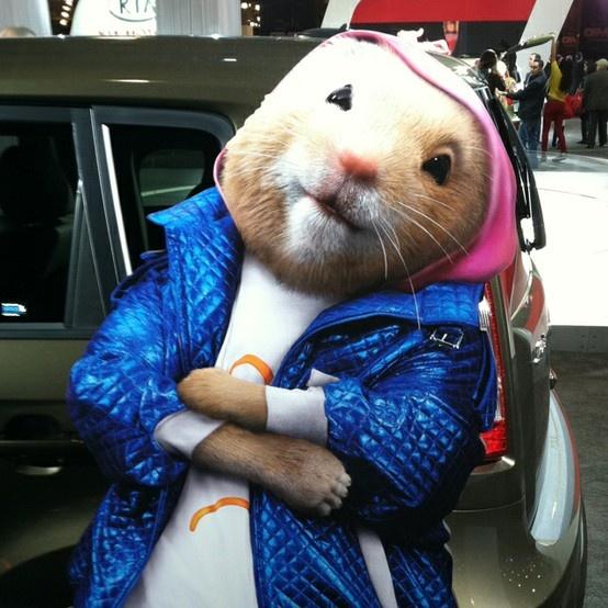 9e892fdc9986d62b2e7b86f451e4ac70 8 besten kia hamsters bilder auf pinterest hamster, kia soul und