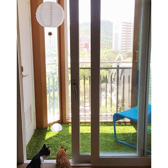 이케아산. 잔디색러그. 성공적.  #cat #kitty #neko #고양이 #냥스타그램 #猫 #猫部 #ねこ #ねこ部 #캣스타그램 #instacat #catstagram #코숏 #이케아 #ikea #인테리어 #셀프인테리어 #베란다 #힐링