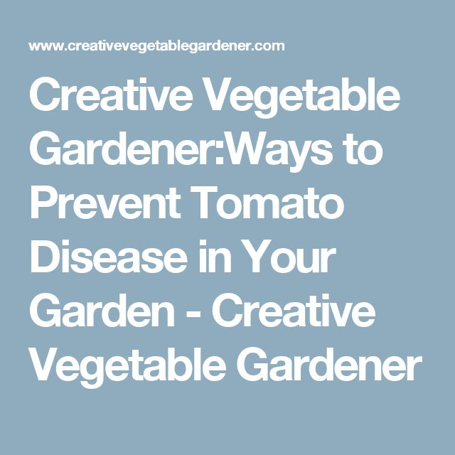 Creative Vegetable Gardener:Ways to Prevent Tomato Disease in Your Garden - Creative Vegetable Gardener