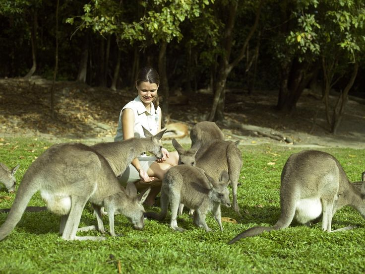 Enjoy the wildlife too when on family holidays in Port Douglas. #portdouglaswildlife #portdouglasfamilyholidays