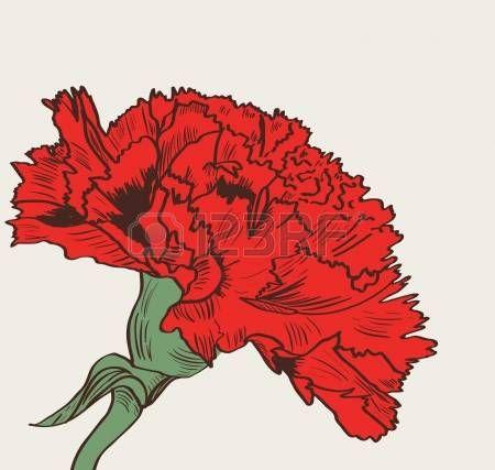 clavel rojo: Ilustración vectorial ingenio clavel rojo dibujo