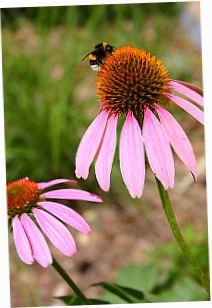 Mein Pflanzenarchiv - Garten-Web-App kostenlos - zum Archivieren von Informationen und Bildern. Den Überblick über die eigenen Pflanzen behalten. www.mein-pflanzenarchiv.de