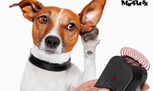 Pétition : STOP à l'utilisation des ultrasons pour éloigner les animaux