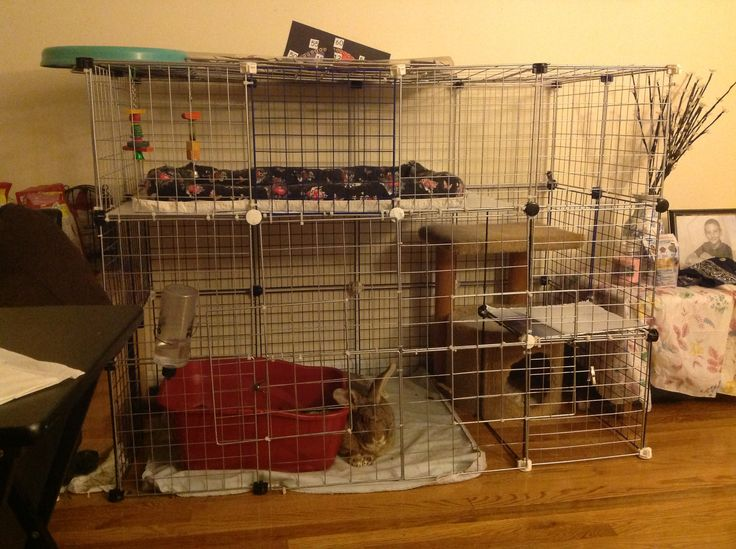 You have to make your own flemish giant cage store rabbit Make your own bunny house