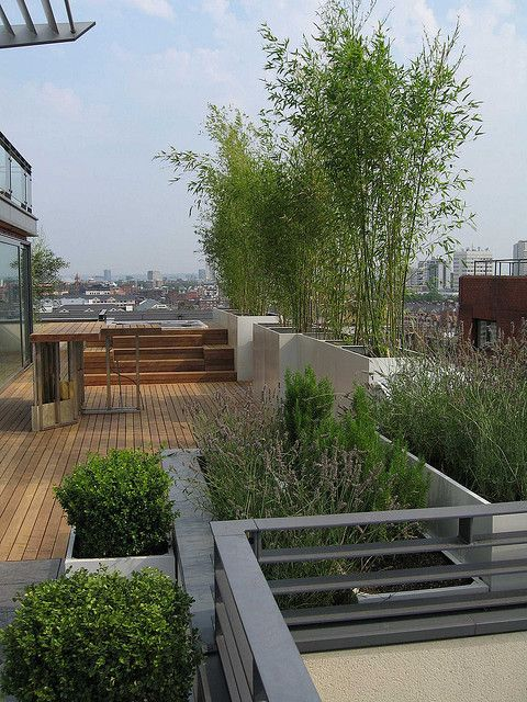 Bamboo, lavender and box planters on roof terrace in London