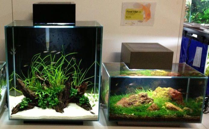 105 best images about fluval edge inspiration on pinterest led aquarium set and fish tanks. Black Bedroom Furniture Sets. Home Design Ideas