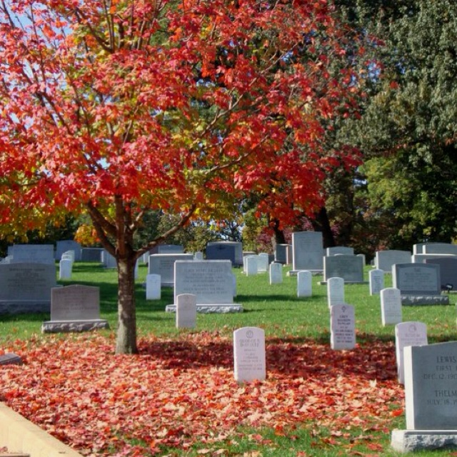 Arlington Cemetery in the fall.