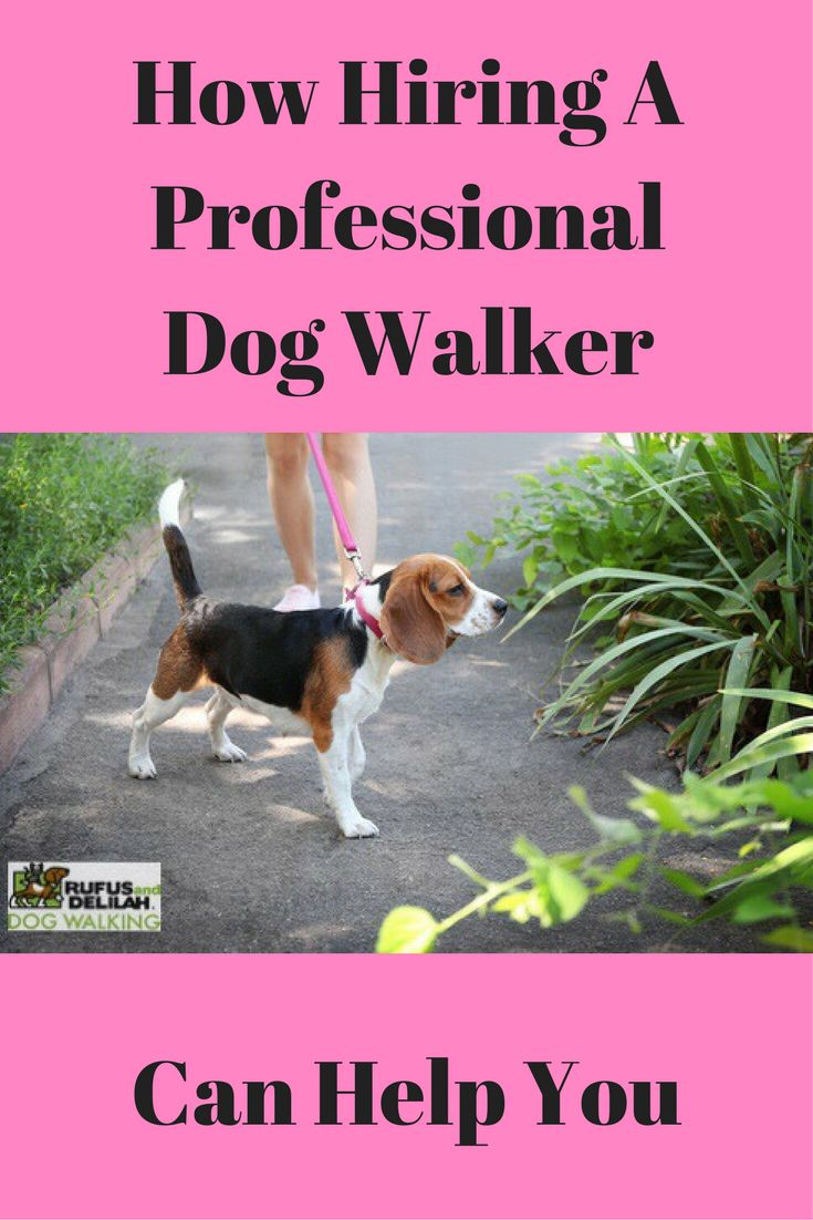 Do you worry about your dog being lonely when you are at work or when you have to stay out late?  Does your dog get all the exercise he or she needs each day?  Check out our new blog on how hiring a dog walk can help you if you have time constraints or perhaps an injury that stops you from walking your dog.