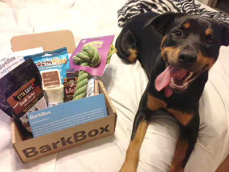 140 best BarkBox images on Pinterest | Dog gifts, Dog lovers and ...