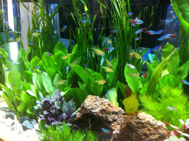 Keep Aquarium Ammonia Under Control And Understand The Nitrate Cycle For  Tank Health.