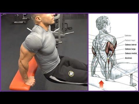 4 Ejercicios para el Triceps (Workout) | Fitness Body - YouTube