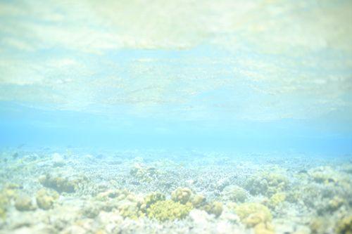 「 ムンジャンガの海と「ぼそっ」 」の画像|鍵井靖章 オフィシャルブログ 鍵井天然水族館 Powered by Ameba|Ameba (アメーバ)