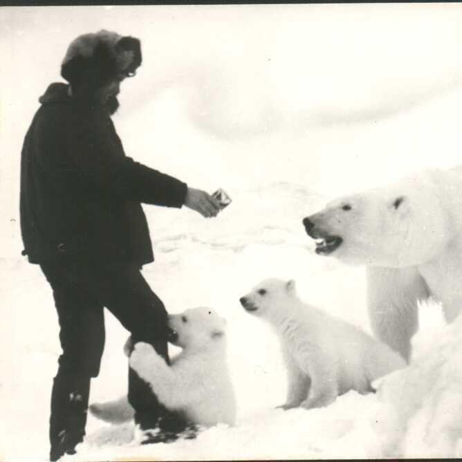 1970 yılında rusya da ölmek üzere olan kutup ayıları ile ilgili görsel sonucu
