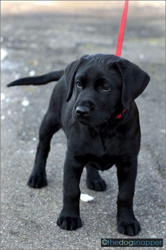 black puppies - Google Search